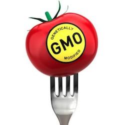 GMO Tomato