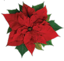 Westtown Monthly Meeting Holiday Plant Sale